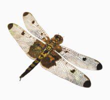 Dragonfly by Harri