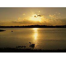 cignet sunset Photographic Print