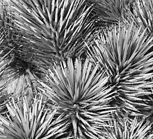 Joshua Tree Textures by Benjamin Padgett