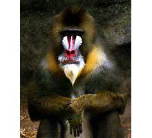Mandrill Baboon Photographic Print