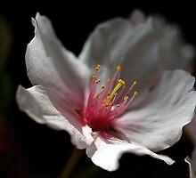 Soft Light by Bobby McLeod