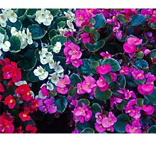 Mix color flowers Photographic Print