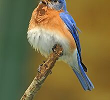 Puffed up and Proud by Bonnie T.  Barry