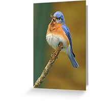Puffed up and Proud Greeting Card