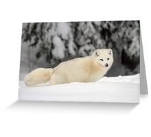 Arctic Wolf (Canis lupus arctos), also called snow wolf or white wolf Greeting Card