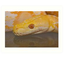 Albino Reticulated Python Art Print
