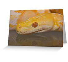 Albino Reticulated Python Greeting Card