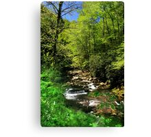 Great Smoky Mountain Stream Canvas Print