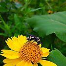 Bee On a Flower by Scott Hawkins