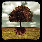 de la tierra by Shannon Clough