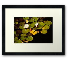 Off-White Lotus Flower Framed Print