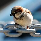 bird on a chain by Troy Spencer