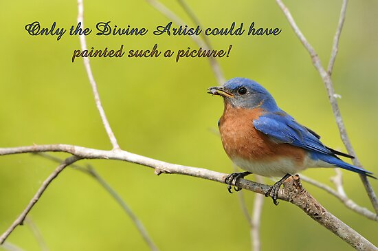Only the Divine Artist could have painted such a picture . . . by Bonnie T.  Barry