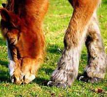 Horse Shoes  by keleka656