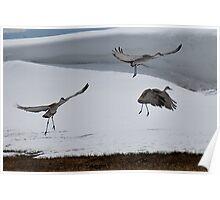 Cranes In Flight ~3~ Poster