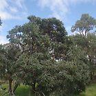 Banksia Tree by lezvee