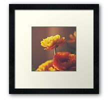 Cinnamon Peach Framed Print