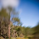 Berima XVII - Lensbaby by David Amos