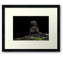 Australian Fur Seals 2 Framed Print