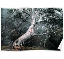 Snow Gum Forest Poster