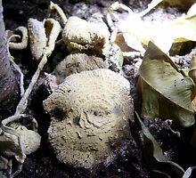 Death Fungus by Macroverse