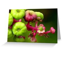 Poke Flower Changing To Berries Greeting Card