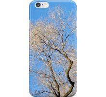 Top of Tree iPhone Case/Skin
