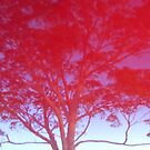 Red Tree by Maryanne Lawrence