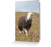 Herdwick Sheep Greeting Card