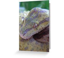 Juvenile Green Tree Python Greeting Card