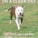 On A Clear Day - Ataxia Clear APBT's - York Kennels - by Ginny York  by Ginny York