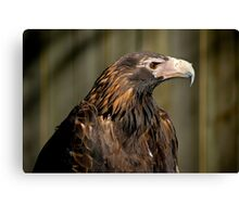 Wedge-tailed Eagle Canvas Print