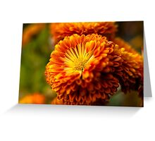 Orange Mum Greeting Card