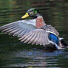 Great Wings! by jozi1