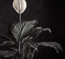 white skunk cabbage by Joseph Gerges