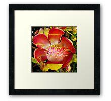 Cannon Ball Flower Framed Print