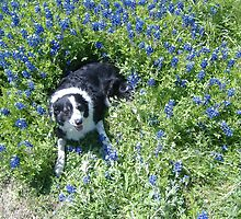 mika in the bluebonnets by judgestick