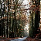 High beech-trees in late December by jchanders