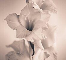 gladiolus #3 by Joseph Gerges