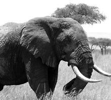 elephant by janik