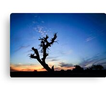 Dry parched tree in a desert landscape at sunset Canvas Print
