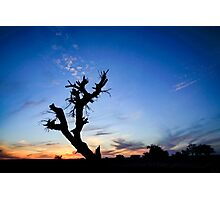 Dry parched tree in a desert landscape at sunset Photographic Print