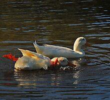 Racing Ducks by George Petrovsky