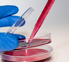Cell cultures in Petri dishes by PhotoStock-Isra