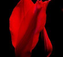 Flamenco by Marilylle  Soveran