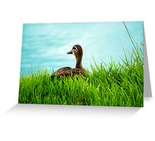 Duck in the Grass - Stephenson Park, Mount Barker, South Australia Greeting Card