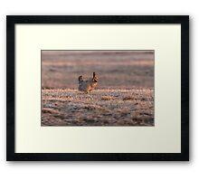 Prairie Chicken 2013-10 Framed Print
