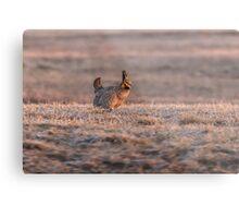 Prairie Chicken 2013-10 Metal Print