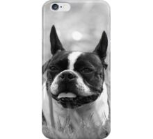 Quorra the Boston Terrier in the field  iPhone Case/Skin