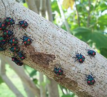 Insects on branch by ARALUEN